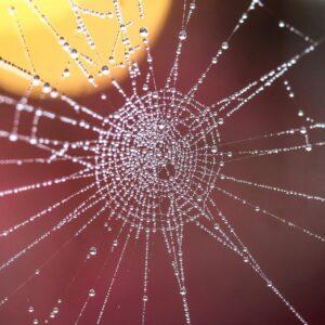 Read more about the article 9 silnych połączeń karmicznych, które codziennie nas otaczają i wiążą niewidzialną nicią.